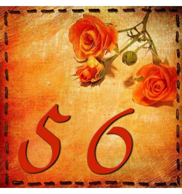 Joli numéro de maison et ses roses